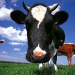 1 miljoen voor duurzame boeren in Utrecht